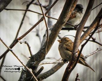 Bird Photography, birds, nature decor, nature photography, Sparrow, garden, wall art