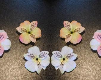 Tiger lily mini ×3