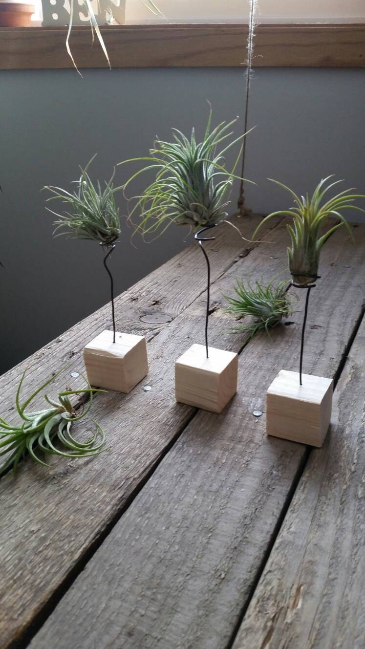 air plant wood and wire holder display. Black Bedroom Furniture Sets. Home Design Ideas