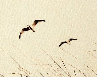 Original etching: 'Gulls over the dunes', hand-printed from a solar plate. Limited edition.