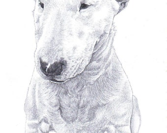 BULL TERRIER (1) dog Limited Edition art drawing print signed by UK artist