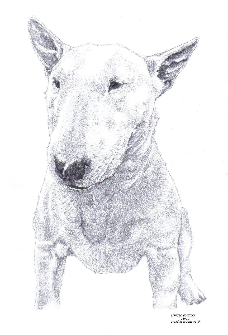 bull terrier artist bull terrier 1 dog limited edition art drawing print signed 9488