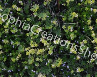 Flower Foliage
