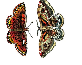 Mirror Moths