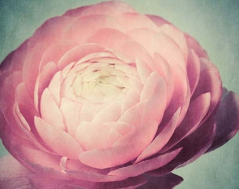 Flower Photography, Pink Ranunculus Flower Photo,Dusty Pink Flower Art, Nature Photography, Still Life Photography