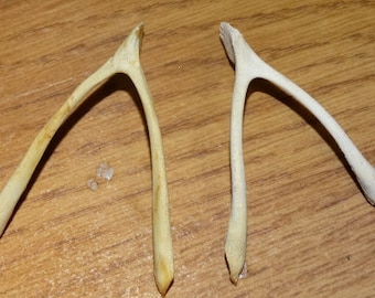 2 Chicken Wishbone, Cluck Cluck, Gobble, Thanksgiving Chicken Wishbones (2) Bones