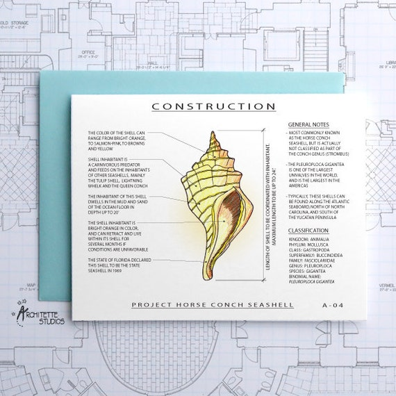 Project Horse Conch Shell - Architecture Construction Card