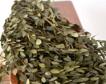 Bunch of Olive Green Teardrop Eucalyptus, preserved eucalyptus, willow eucalyptus, green eucalyptus, olive green greenery