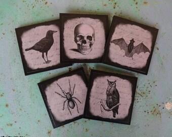Halloween Curiosities coasters - set of five 5 - cabinet of curiosities, gothic decor, Halloween decor, skull, raven, crow, owl, bat, spider
