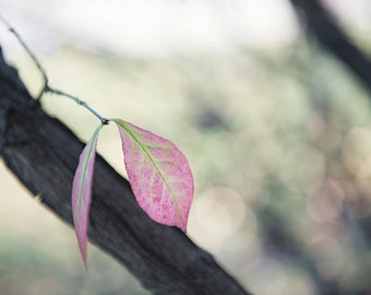 Pink Fall Leaf-fall photography - autumn decor - autumn photo- leaf photography( 5 x 7 Original fine art photography prints) FREE Shipping)
