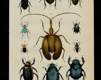 1850 Antique BEETLE print, hand colored Beetles, beetle, insects, original antique