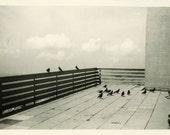 "Vintage Photo ""Black Bird View"" Artistic Wall Art Snapshot Antique Photo Black & White Photograph Found Paper Ephemera Vernacular - 120"