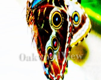 Psychedelic Butterfly Print, Multicolored Surreal Giclee Art, New 4x6 Color Print in 5x7 Mat, Nature Wildlife, FREE SHIPPING