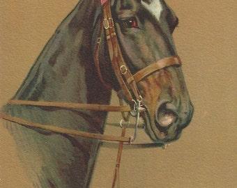 Rivst Bridled Black - Vintage 1940s Artist-signed Saddlebred Horse Postcard