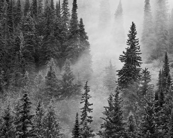 Nature Photography, Mountain Photography, Trees in Mist, Black and White Fine Art Photo, Mountain Photos, Canadian Rockies, Canada Photo