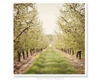 Wall Art For Living Room, Apple Orchard Photograph, Nature Photography, Fresh Home Decor Art Print