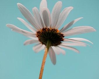 Flower photo, wild flower photo, flower art, teal home decor, green, aqua, minimalist decor