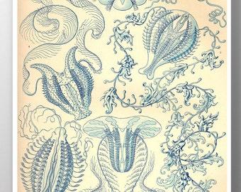 Jellyfish Art Print, Blue Jellyfish Poster,Ernst Haeckel Illustration, Nautical, Beach Home Decor, Marine Life Wall Art, Educational Art