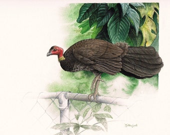 Queen of the Backyard - Australian Brushturkey Original Watercolour Painting