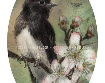 Black Phoebe & Apple Blossoms - Original Art Print