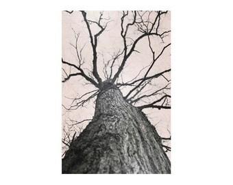 Tree art, large vertical art, neutral wall art, large tree photography, beige art, fine art photography print, linden tree 16x24 20x30