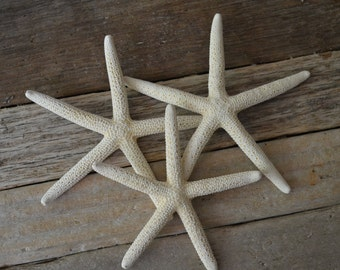 White Finger Starfish 3-4 inches|10 pc