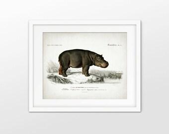 Hippopotamus Art Print - Antique Hippopotamus Illustration - African Hippo Art - African Animal Art - Single Print #1783 - INSTANT DOWNLOAD