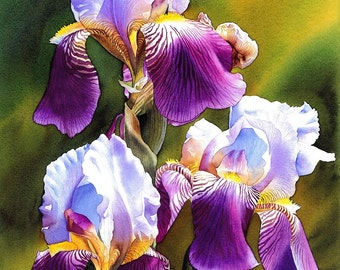 Sunny Iris, Giclee Art Print, limited edition, watercolor flower, watercolor iris, esperoart