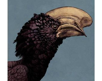 Silvery-cheeked Hornbill colour art print
