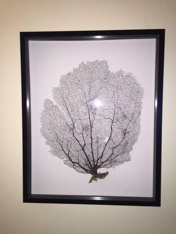 Items Similar To Framed Sea Fan Coral Shadow Box 16x20