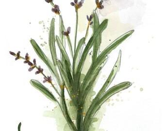 Original Watercolor Painting - Lavender