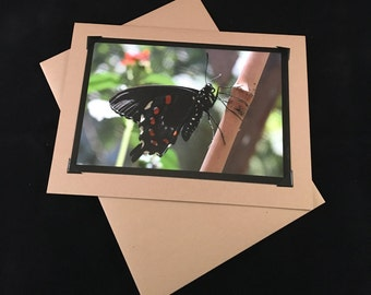 Pipevine Swallowtail 5x7 Photo Greeting Card - Note card