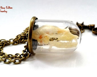 real bat skull glass vial necklace