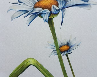 Original coloured pencil drawing. 'Daisy, daisy....' Free UK delivery.