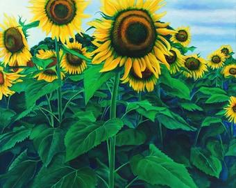 Grinter Farm Sunflower Fields