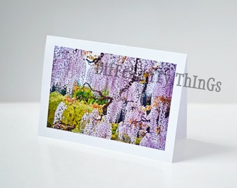 """Nature Photo Greeting Card-""""Hanging Wisteria"""" Floral Picture Notecard- Handmade Blank Paper Cards-Thank You, Wedding, Congratulations"""