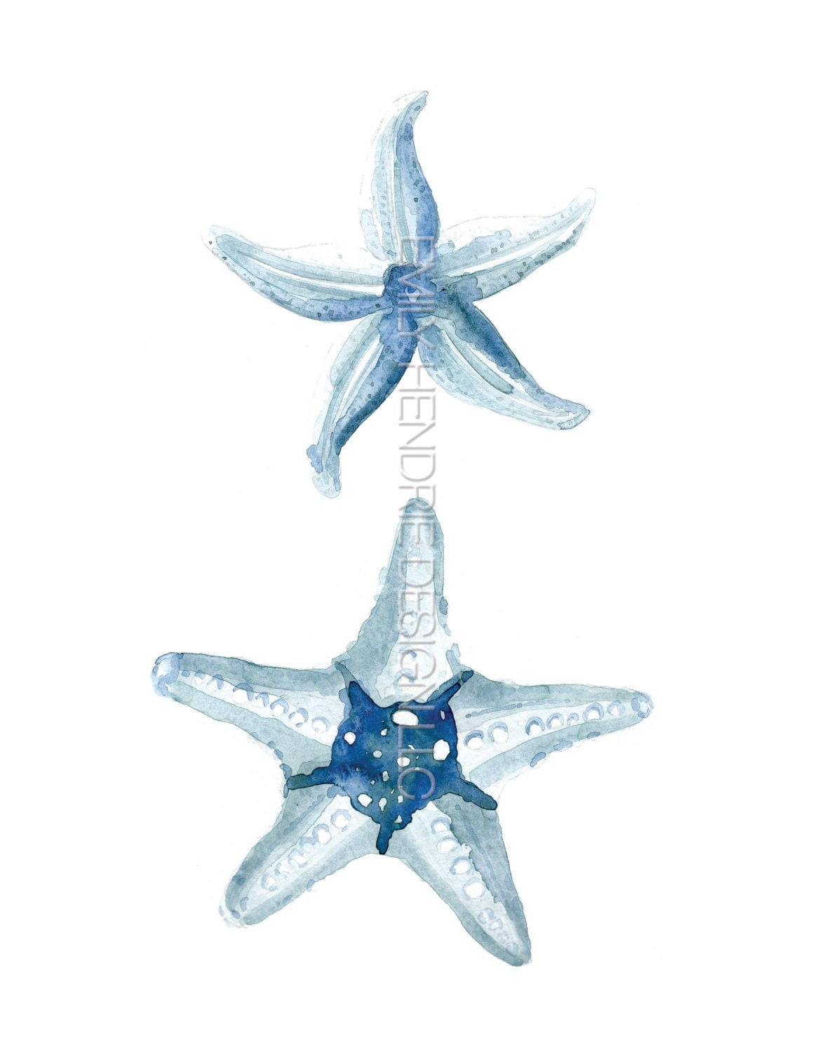Common North Atlantic Starfish and Bumpy Starfish Watercolor