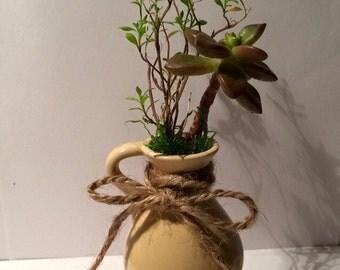 Mini Yellow Vase Live Succulent Planter