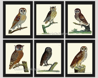 Antique Owl Print Set of 6 Beautiful Antique Green Nature Vintage Forest Natural Science Poster Large Bird Home Room Wall Decor to Frame AE