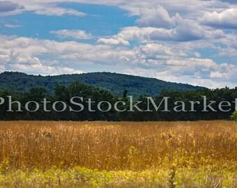 Dried Grass Field - Photography Backdrop - Digital Background - Photoshop - New England Field - Mountain Backdrop -  Wheat Field