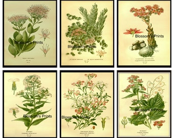 """Set of Six Flower Prints from the 1800's. Plates 19,20,21,26,27,28  (These Prints are 8"""" x 10"""")"""