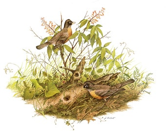 Large print (12 inches tall and 15 inches wide) Robin, painted by James Lockhart for the book Wild America