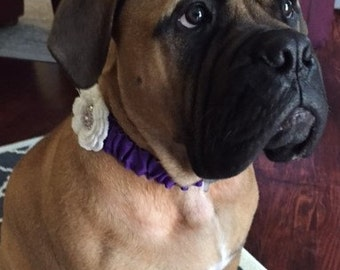 """17.5"""" Purple Dog Necklace/Collar with White Flower and Bling FREE SHIPPING"""