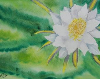 "Original Watercolor Painting, Night Blooming Cereus, 9"" by 12"""