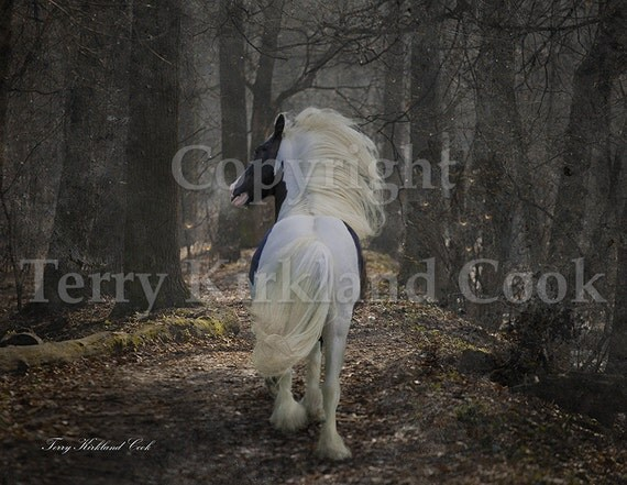 The Midnight Cry ~ Copyrighted Photograph by Terry Kirkland Cook