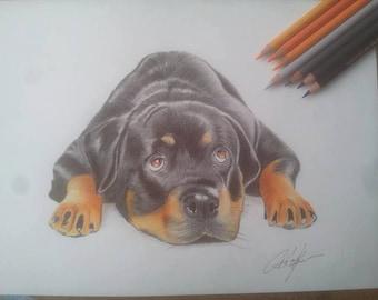 Rotweiller puppy portrait