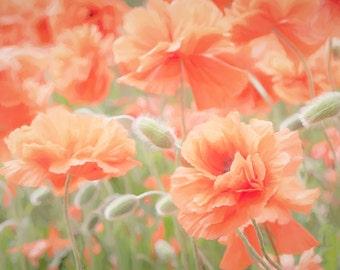Poppy Print, Poppy Flower Photograph, Romantic Floral Art, Bedroom Wall Decor, Coral Peach Flower Photo, Coral Flower Photo, Boho Art Print