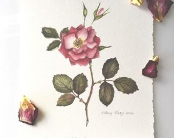 Archival Giclée Print, Pink Rose Botanical,  Hand deckled Edges, Arches Watercolor Paper