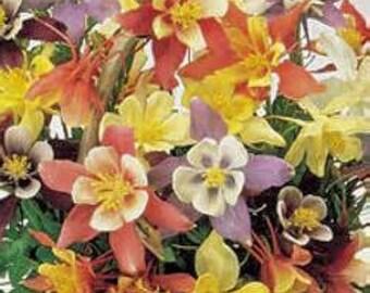 Columbine(HARLEQUIN MIX) 20 Seeds. Flowers