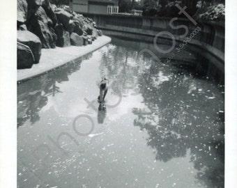 Penguin Exhibit at the Zoo? - Park - Water  - Vintage Snapshot - 1950s